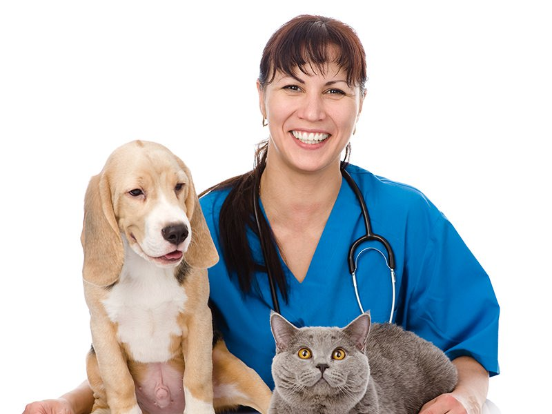 Vet doctor with a cat and dog
