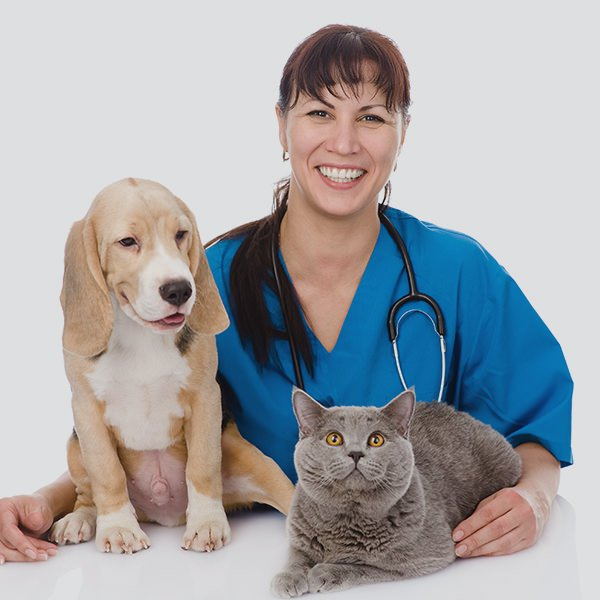Before You Go to the Vet: Treat the Most Common Pet Ailments - Vet doctor with cat and dog