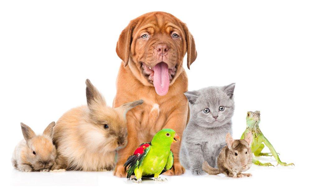 dog breeds - pet friendly dogs
