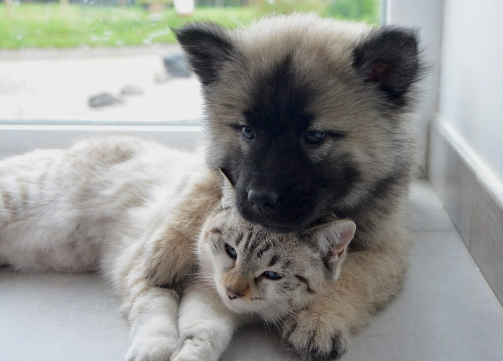puppy and kitten living together