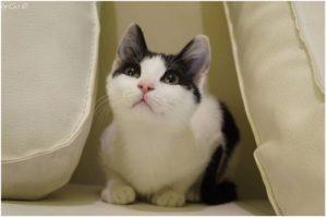 Cat ailments