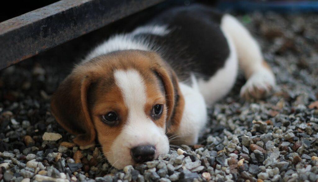 Dog breeds - puppy