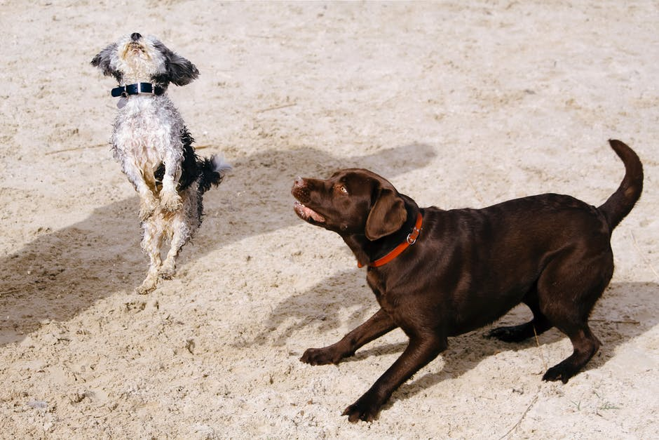 Dating With Pets dogs playing