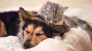Can Cats and Dogs Live Together? - Puppy and kitten cuddling