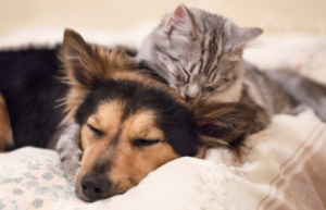 Puppy and kitten cuddling
