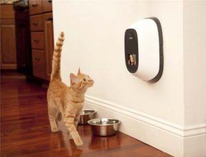 PetChatz HD: two-way audio / video camera