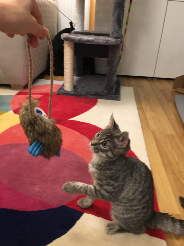 misho and cat toy