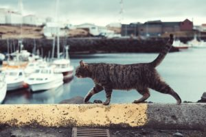 Spaying or Neutering Your Cat - stray cat