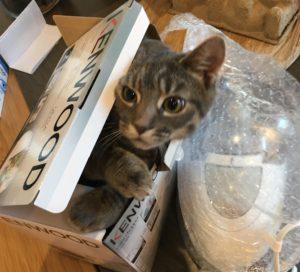 Strange Cat Behavior Explained - Cat in a small box