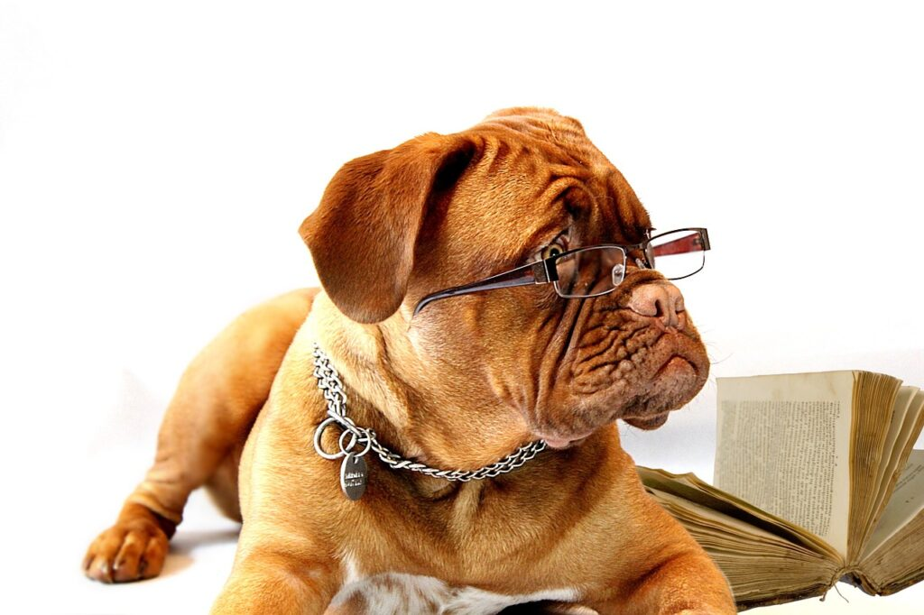 smart things that dogs do - dog with glasses
