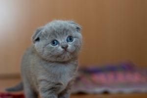 Cat's Litter Box