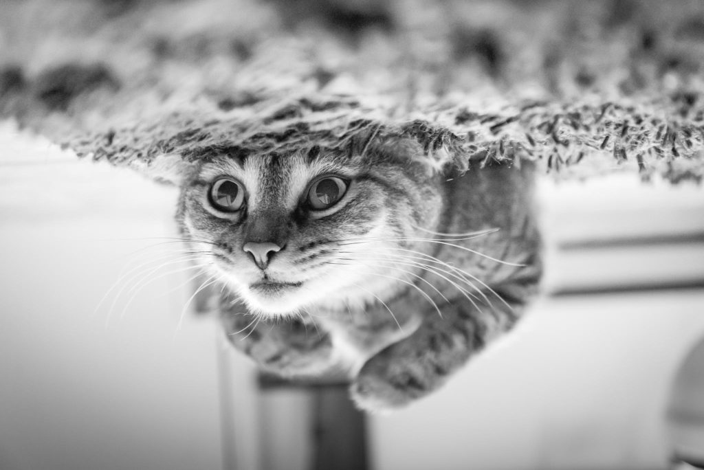 Finding The Right Cat For You