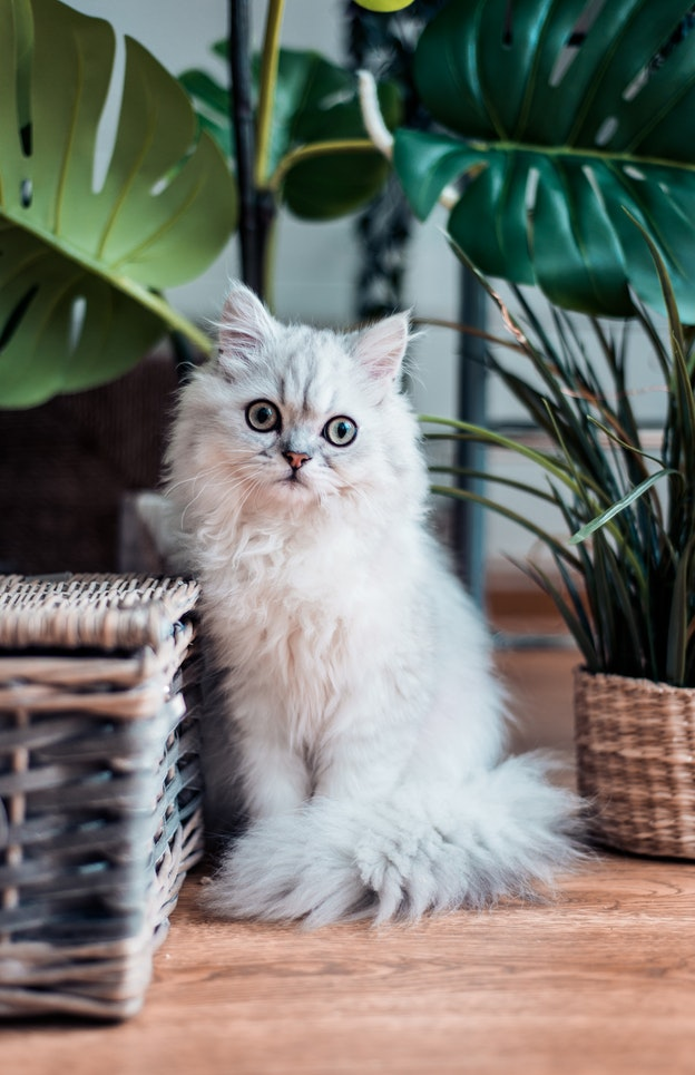 Mishi pets - cat friendly plants