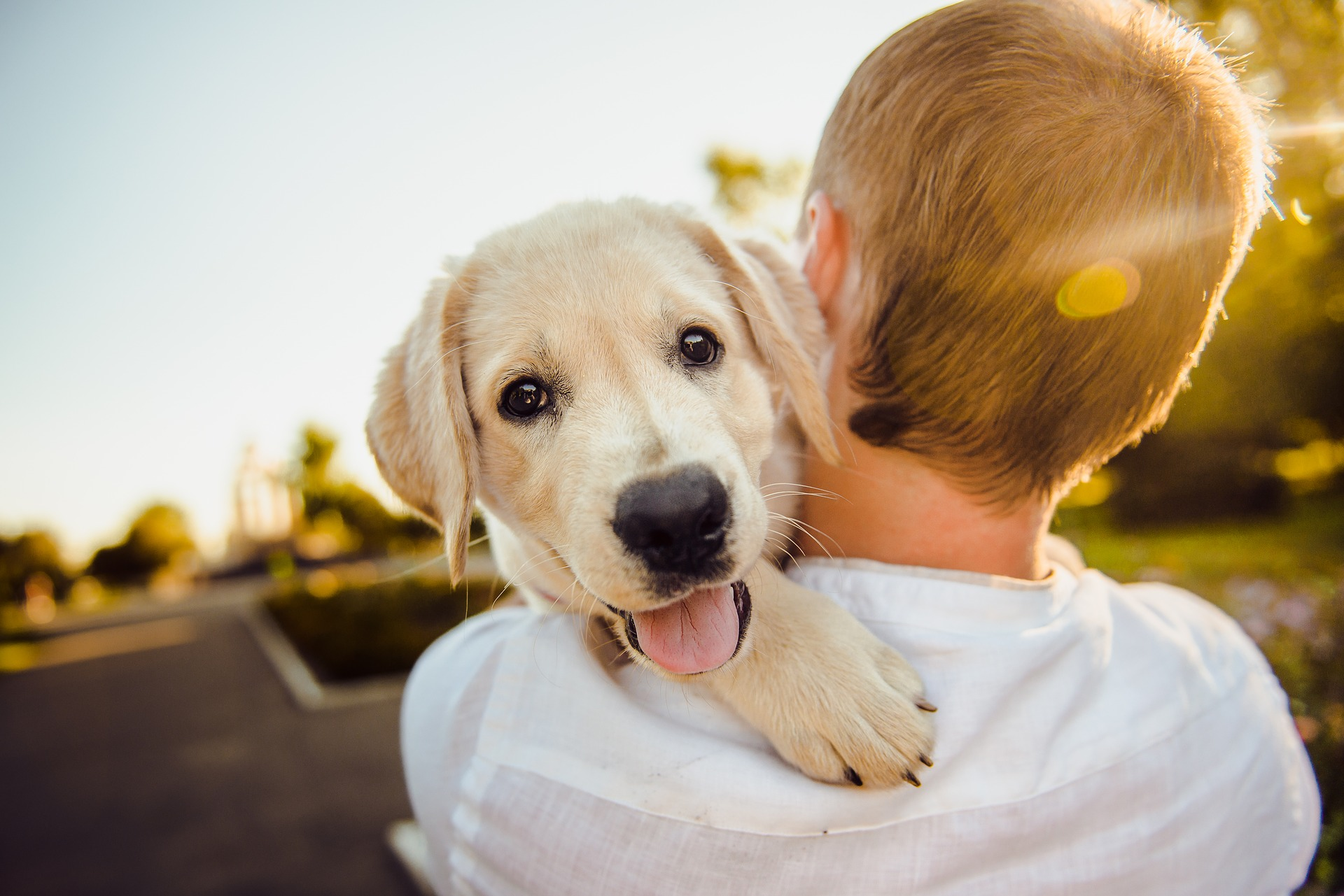 a boy hugging a puppy dog golden retriever