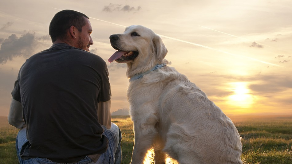 a man and his dog lab at sunset