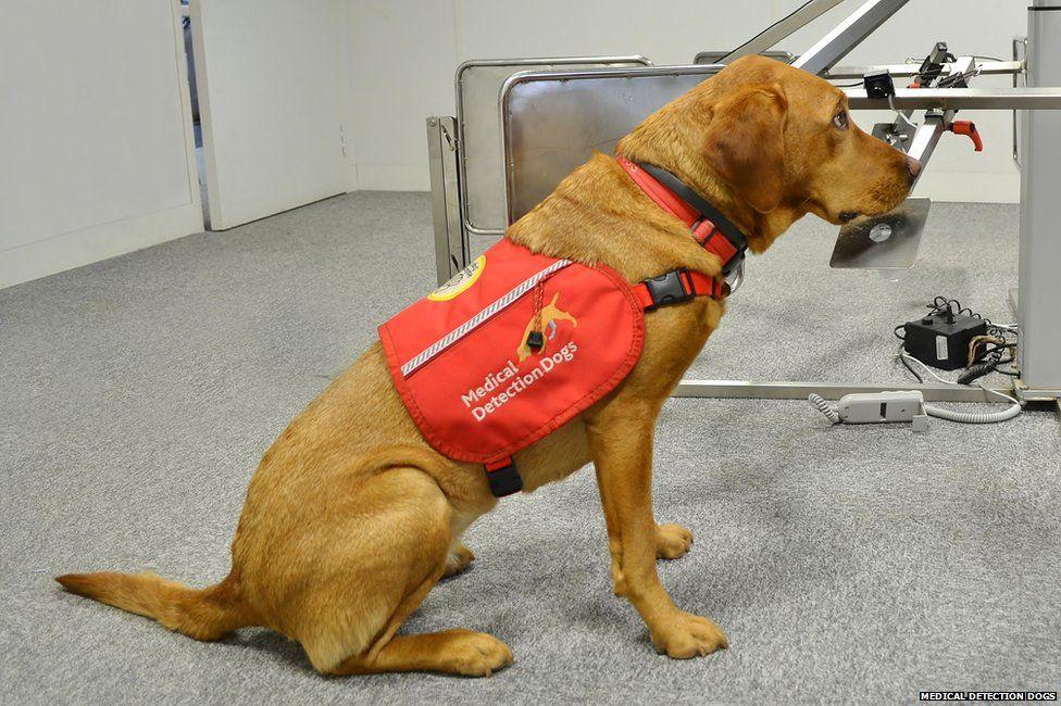 Cancer medical detection dog