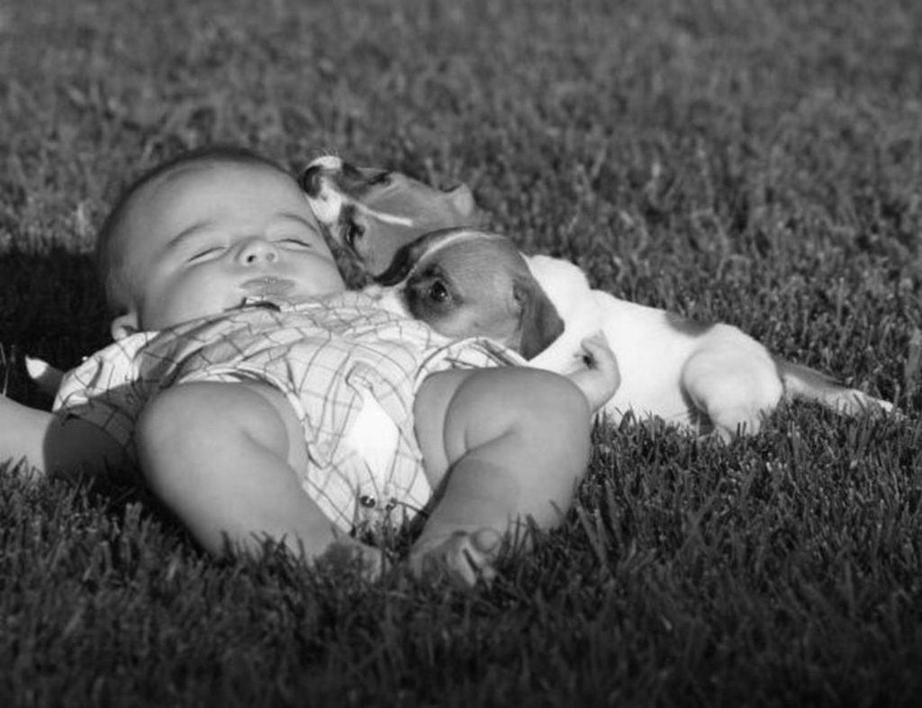 Dog cuddling with a baby