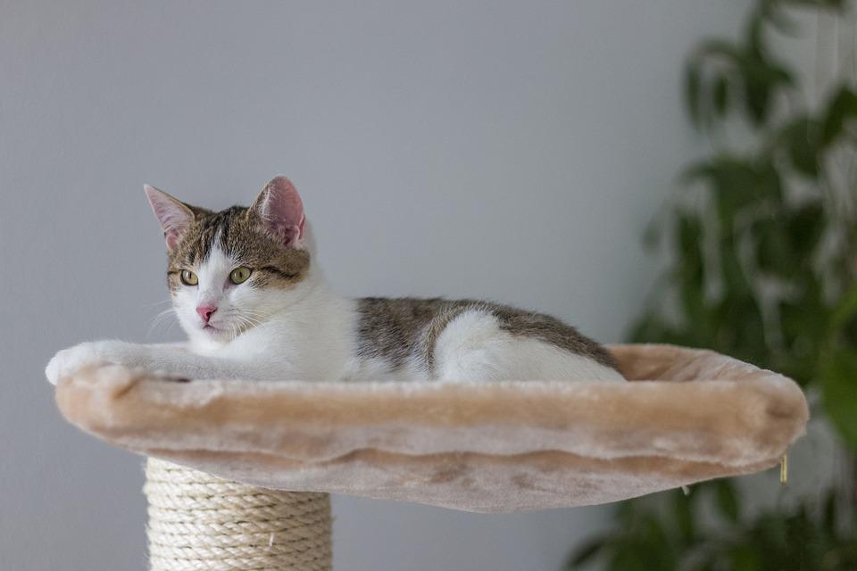 cat home alone - cat in a cat bed