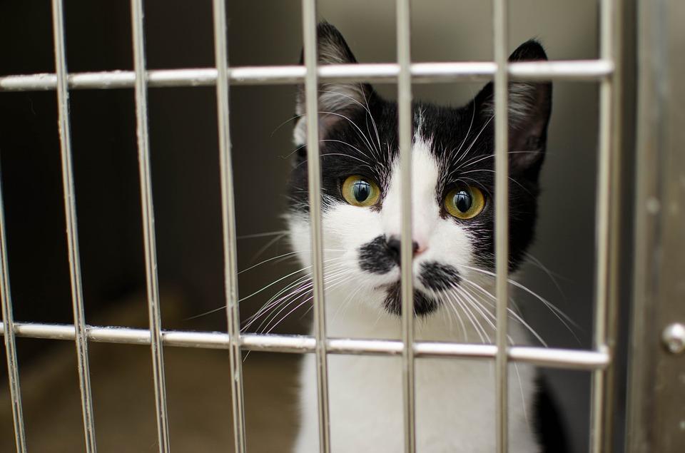 cat in a cat box - behind bars