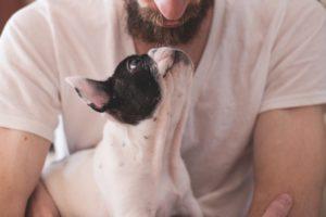 Man hugging a boston terrier dog