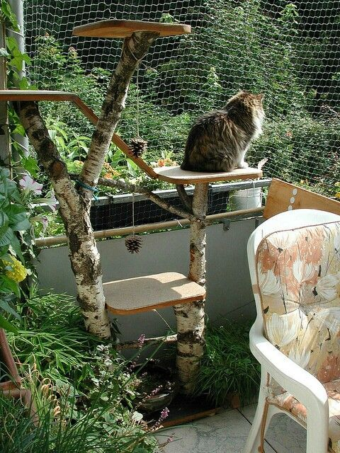 Catios and Cat Leashes - Cat in a bacony catio