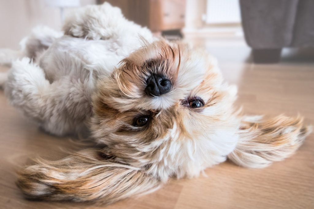 Puppy lying on the floor