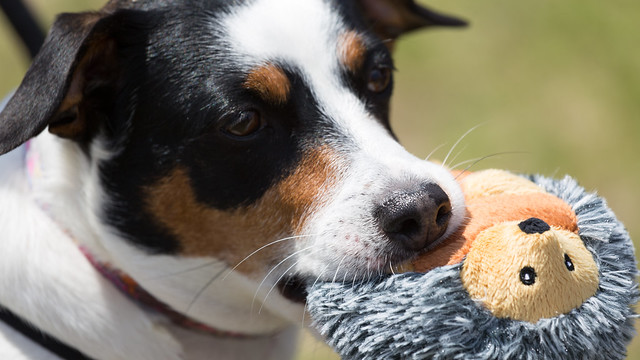 dog sharing a toy