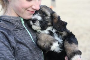 girl hugging a puppy