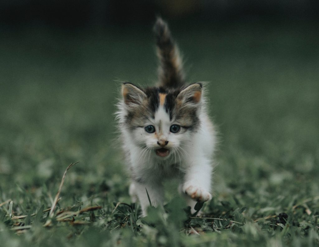 happy kitten running with tail straight up