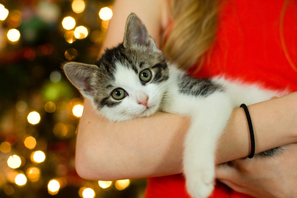 kitten lying in a woman's arms