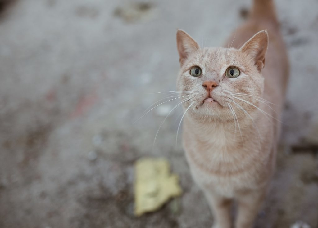 lonely cat waiting for owner
