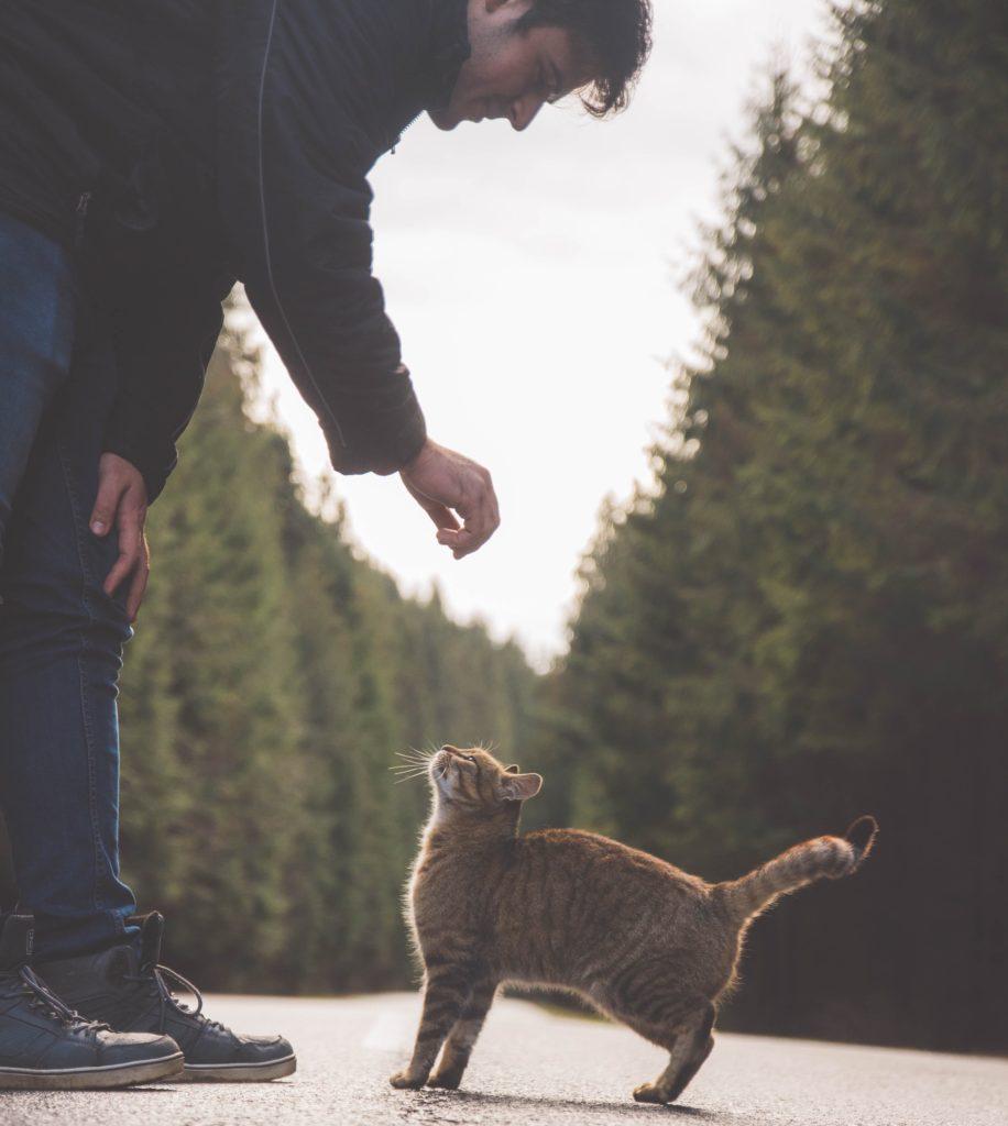 man falando com um gato