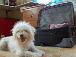 traveling with a dog - dog and a suitcase