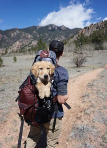 traveling with a dog dog in a backpack of a hiking man