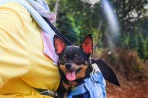 traveling with a dog - dog in a small backpack carrier