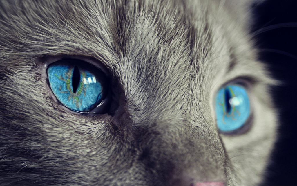 Can Cats See in The Dark - can with blue eyes