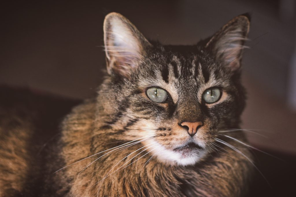 Can Cats See in The Dark - Brown cat in the dark