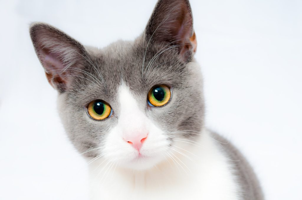 an inquisitive looking cat