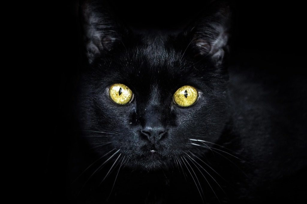 Can cats see in the dark - black cat in the dark