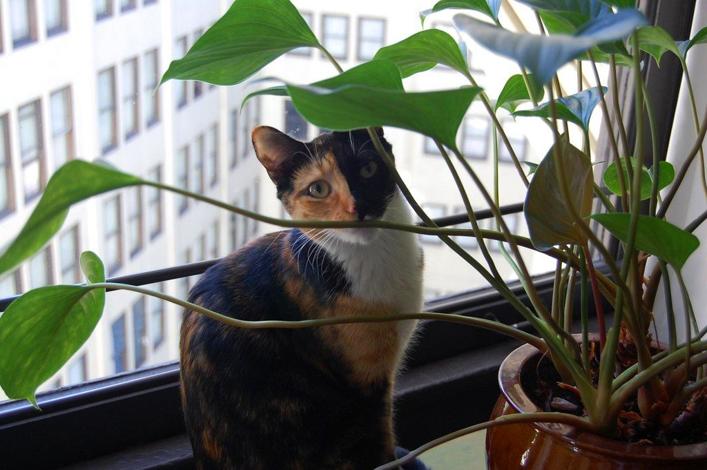 Cat and a cat friendly plant