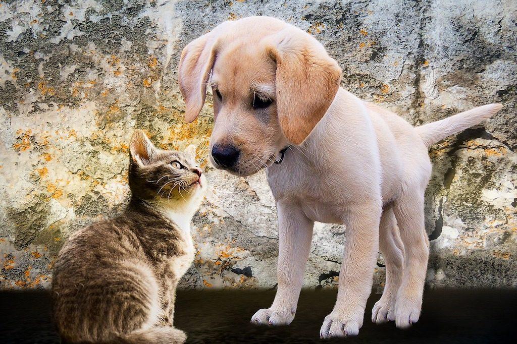 cat and dog puppy eyesight