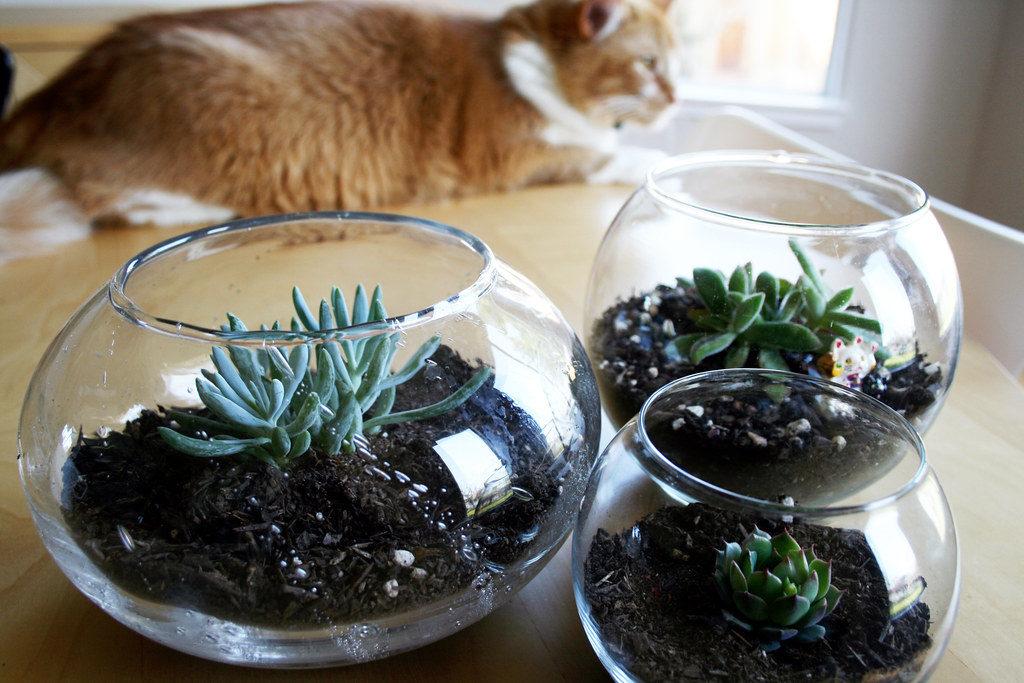 cat and cat friendly plants succulents