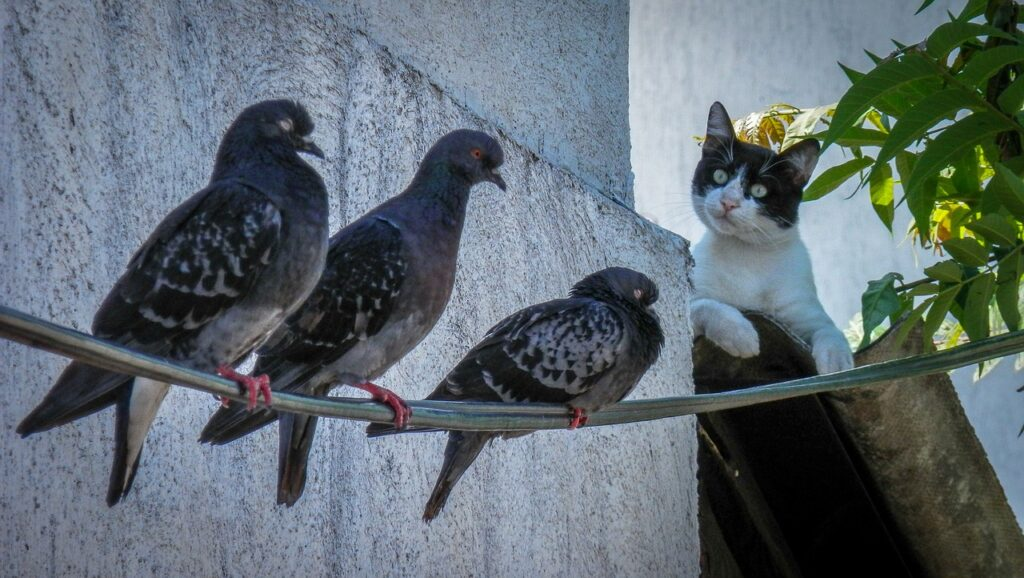 The advantages of having an indoor cat - cat hunting birds