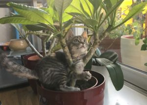 cat in a cat friendly plant