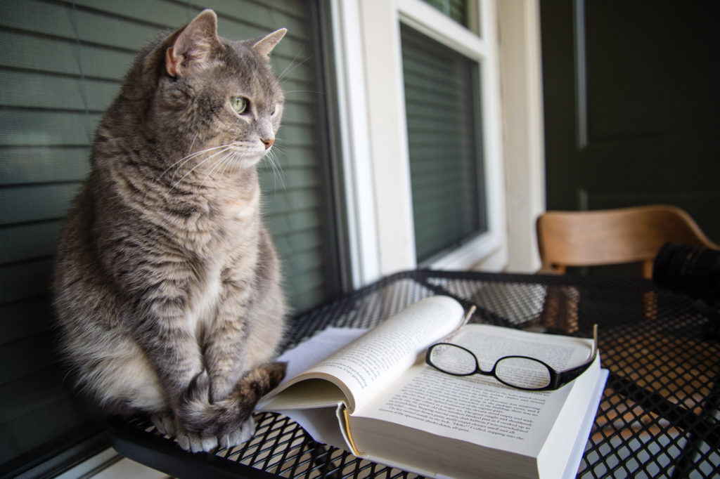 cat in front of a book and a pair of glasses