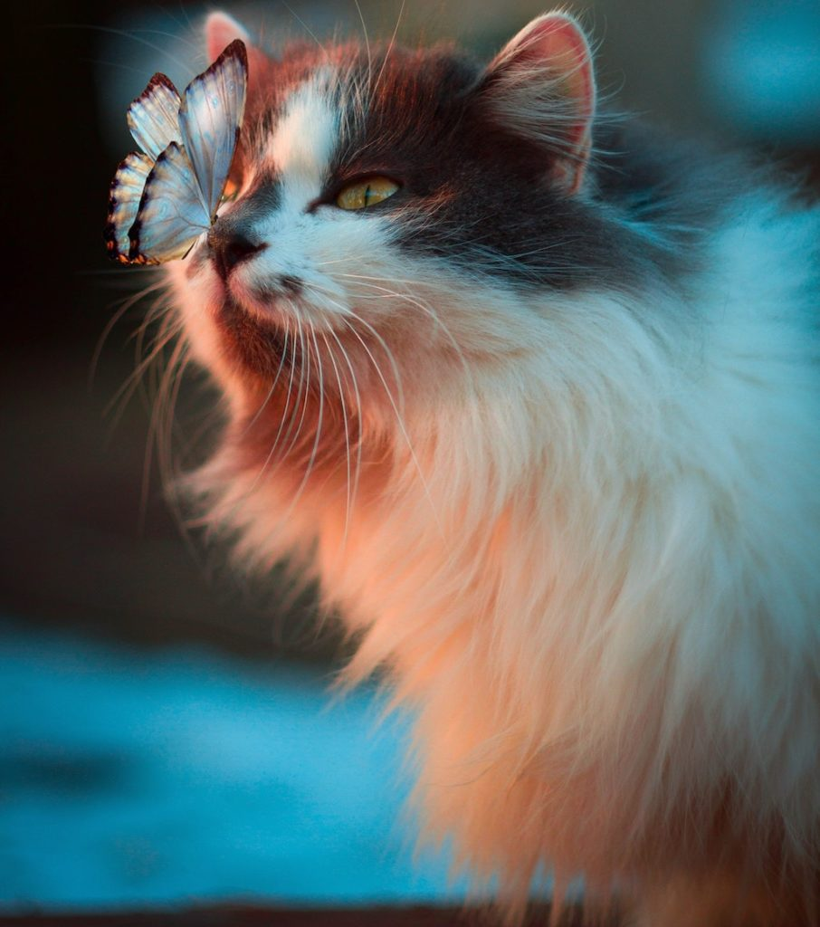cat with a butterfly on her nose