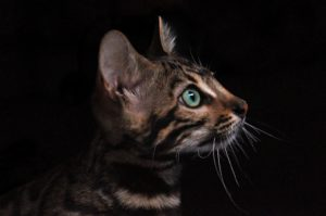 cat with green eyes in the dark