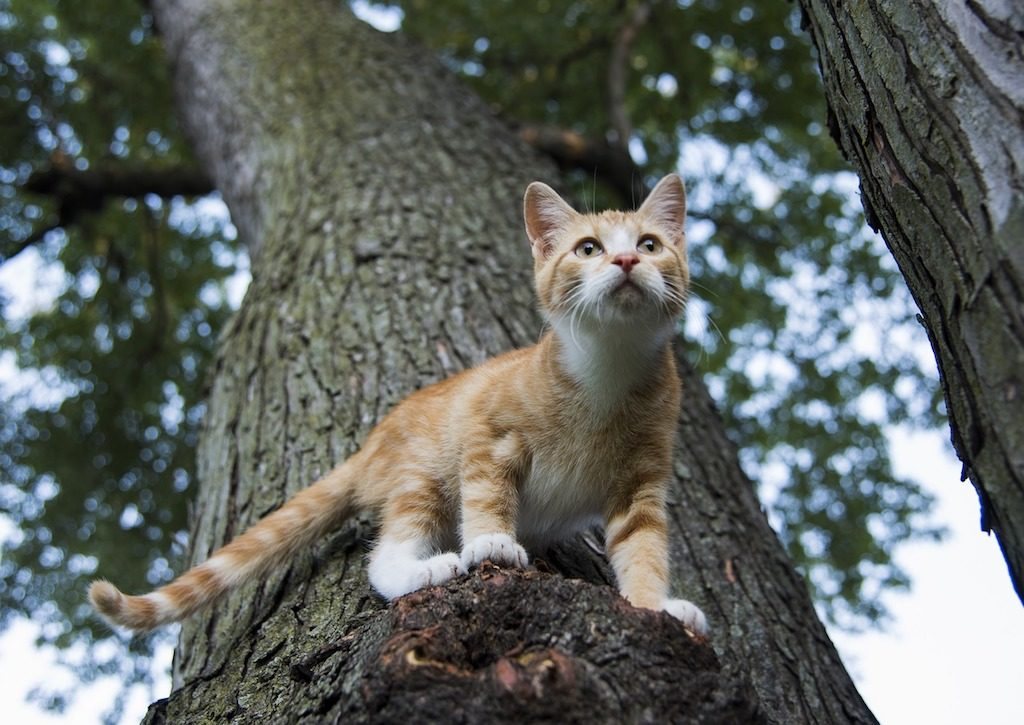 Cat's hunting instincts - ginger cat in a tree