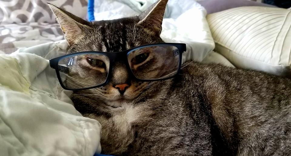 Is your cat smart - tabby cat with glasses on