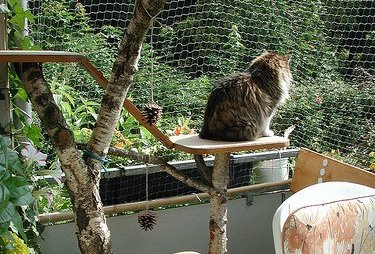 cat on a balcony catio